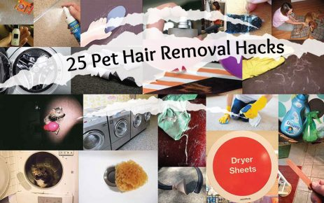 25 Great Pet Hair Removal Hacks