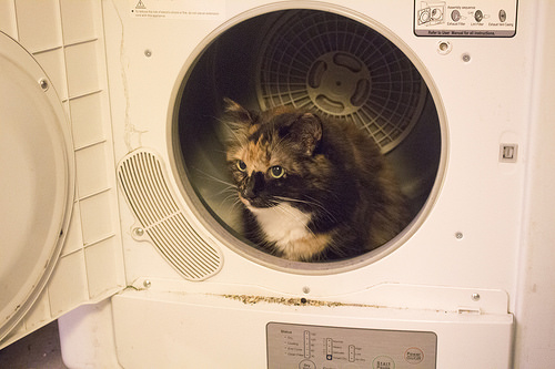Dryer for Pet Hair Removal
